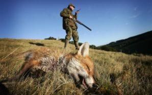 caccia