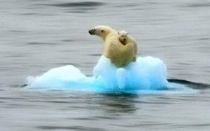 scioglimento-dei-ghiacci - clima